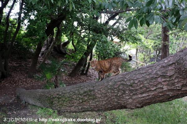 2016060426この木何の木。3
