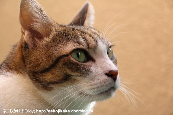 2016092301猫の顔。1