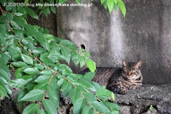 2016071806夕涼みの猫たち。3