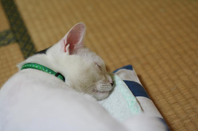 眠い!クロ