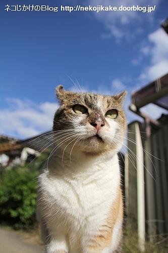天高く猫肥ゆる秋。