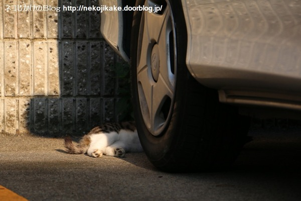 2016071809夕涼みの猫たち。6