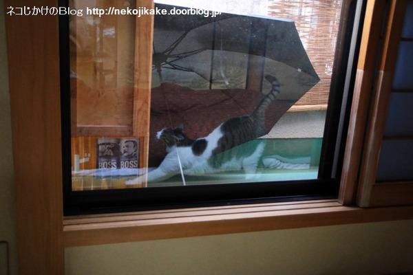 2014122101窓に映る。