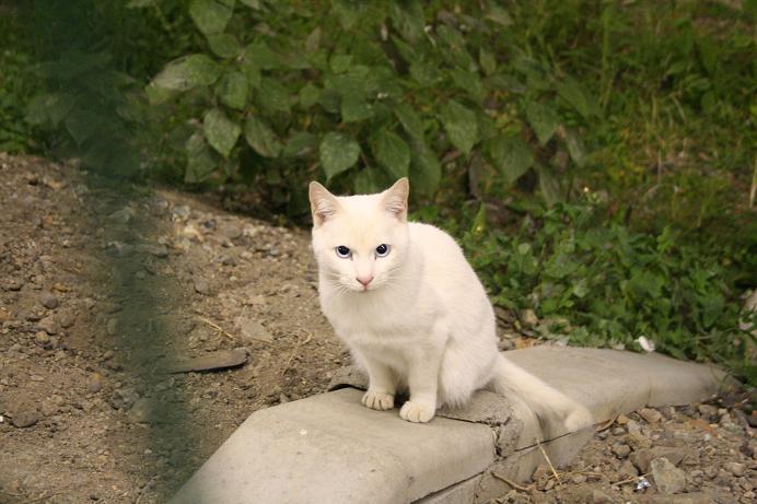 駅の白ネコ。
