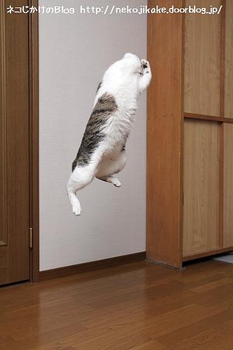 ハイジャンプ。