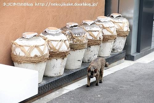壺を守る猫。