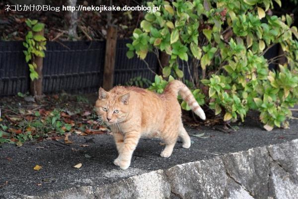 2014112503昔からいる猫。
