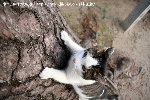 ボクも木登り練習・・・。