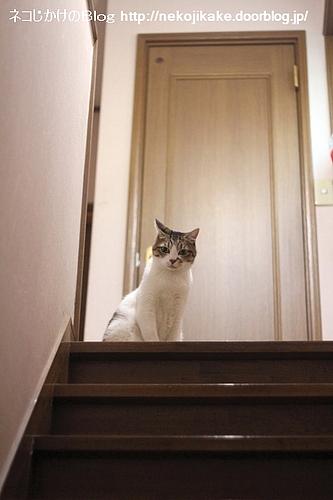 階段上のシマ。