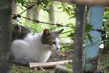 池のそばのネコたち。その3