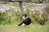 池のそばのネコたち。その4
