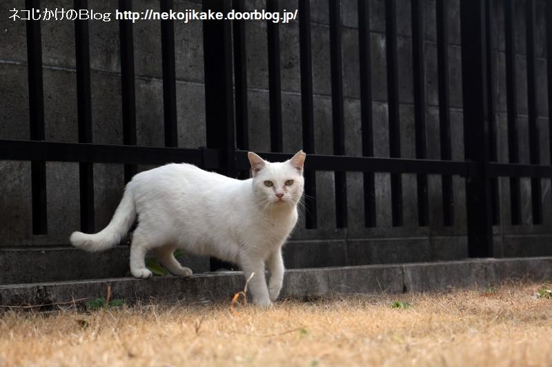 2017012915白猫登場。