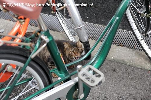 この自転車持ってかないで!