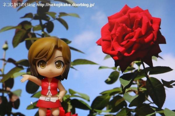 2016102014真っ赤なバラを君に。1