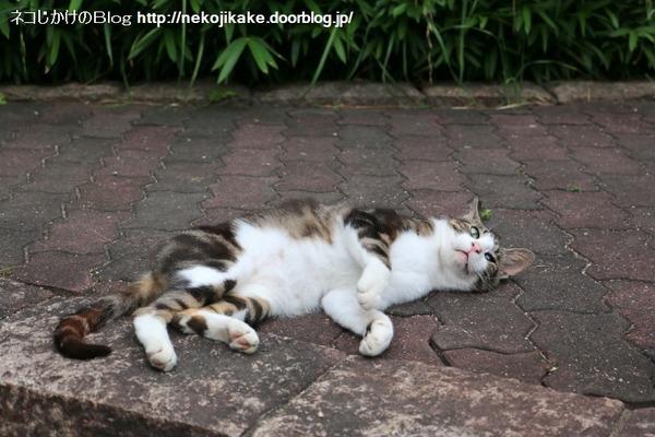 2016060917寝転んでナンボの猫の世界。9