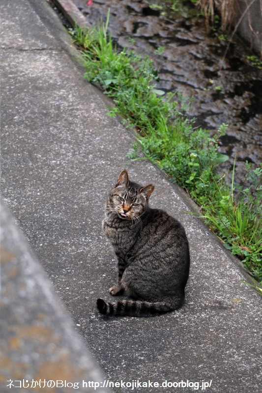 2019032812川沿いの猫たち。2