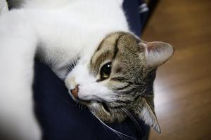 ネコは。シマ1