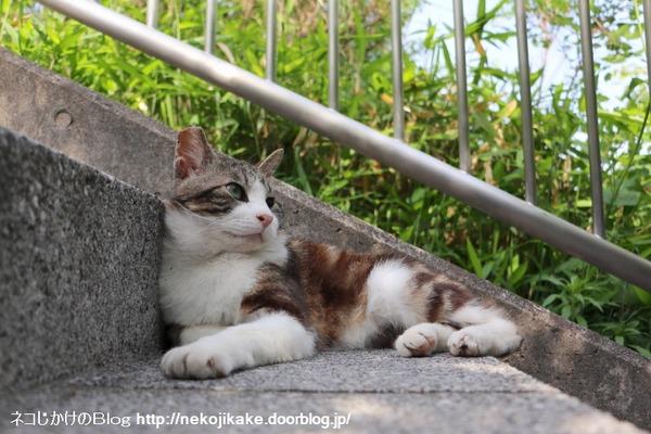 2016050506階段猫。4