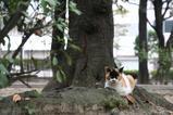 ネコと木。その1