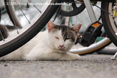 私も自転車に乗せてって。