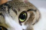 おれの目を見ろ。シマ1