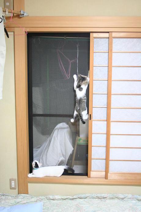 ネコのIT化とロッククライミング。シマ