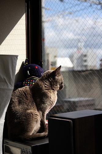 猫カフェ「あまえんぼう」のネコたち1