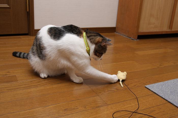 ネズミとネコ。シマ2