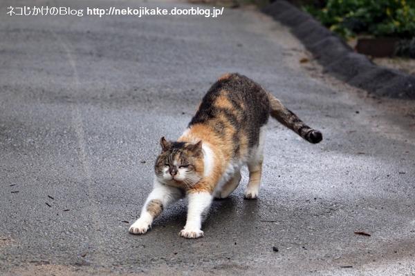 2015031902猫つながり。1