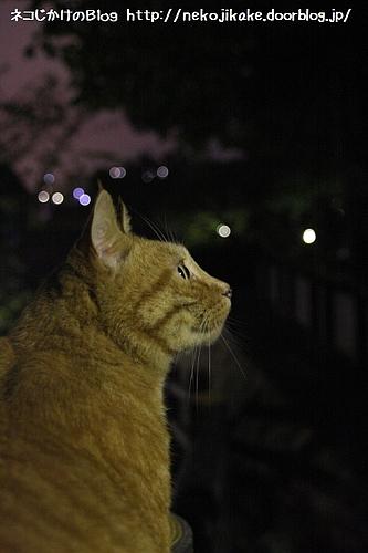 街灯に照らされて。