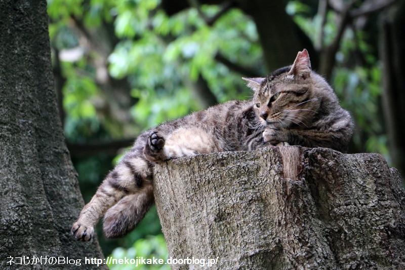 2015061506フォトジェニックな猫たち。1