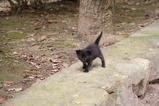子ネコが歩く。その1