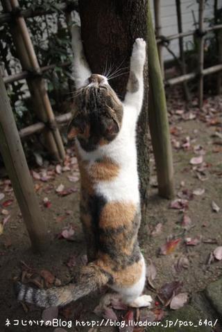 木登り。その1 さいちゃん