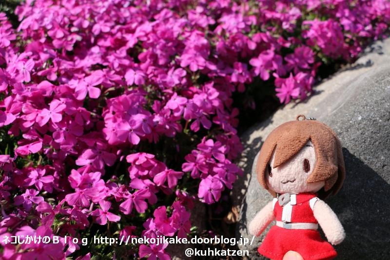 2020041403花は咲く。2