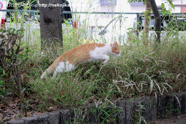 2014092002藪から猫。