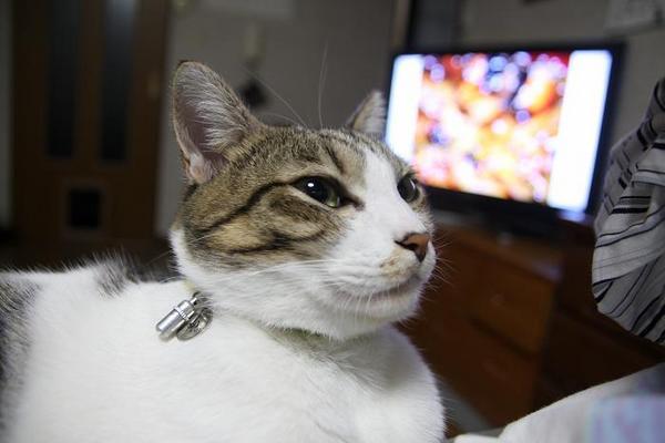 ネコは何を見ている?シマ1