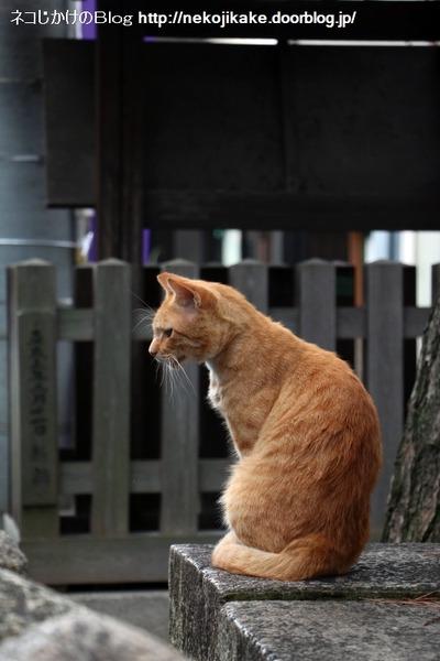2016092205朝の神社猫。1