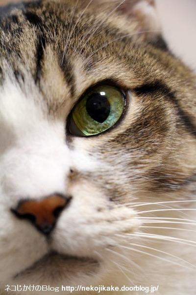 2016112402猫の観察。2