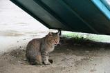 雨宿りするネコ。その2