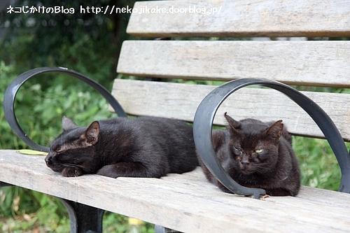 黒ネコのベンチ。