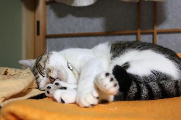 寝ます。シマ1