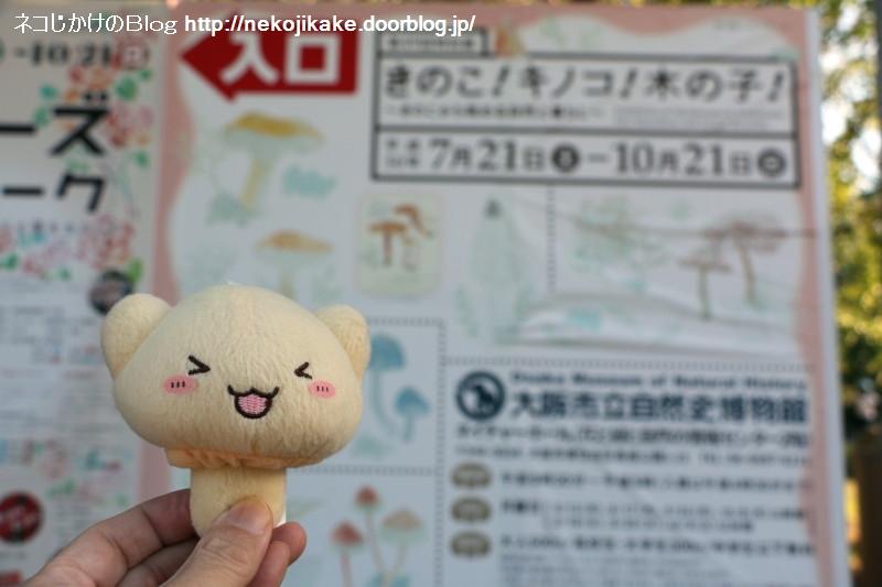 2018102121きのこ!キノコ!木の子!きねこ!