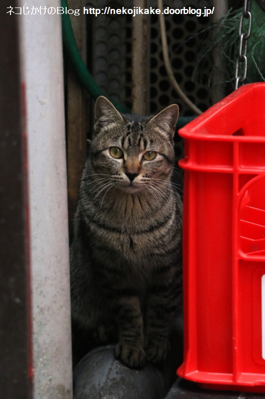 2017040603猫がこっち見てる。1