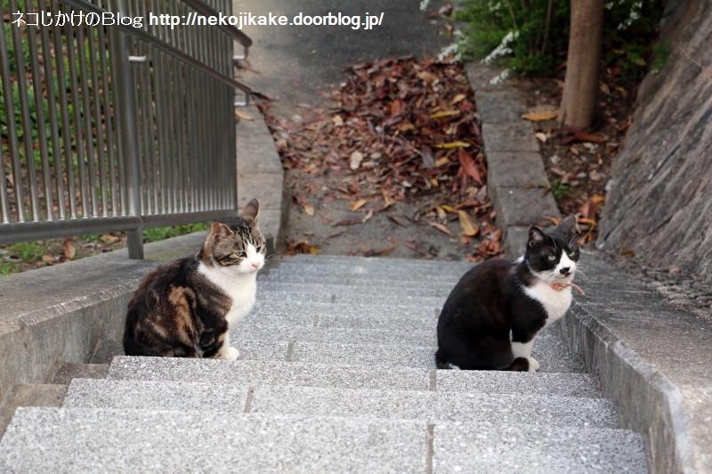 2016032204階段に並ぶ。