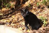 黒いネコは悪くない。