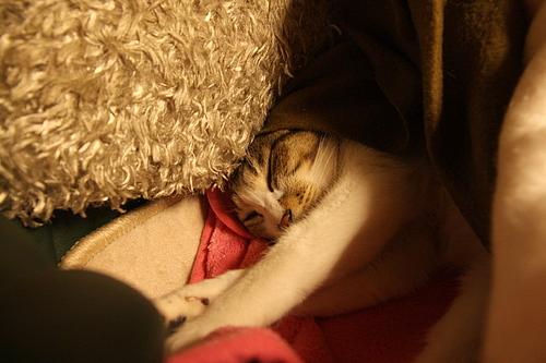 やっぱり毛布の餌食。