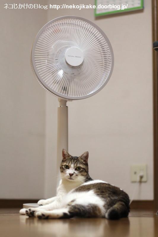 2017072402扇風機と猫。1