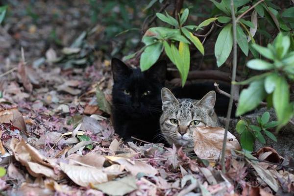 ネコめぐり。その7 くーちゃん キジトラ子ネコ