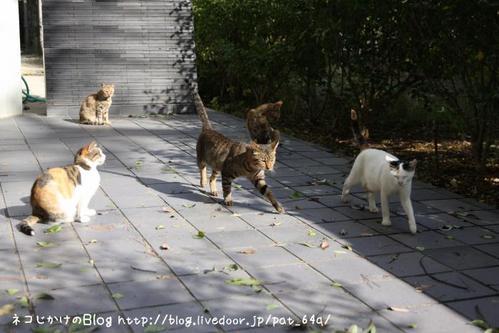 台風一過。その4 ネコたち