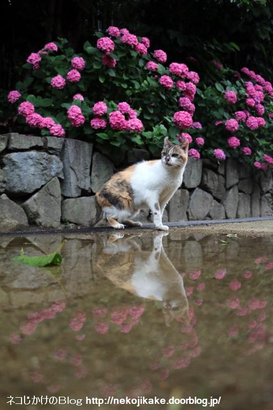 2015061904今日の猫巡り。3